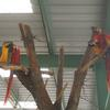 Macaws in Avery at the Oasis Sanctuary